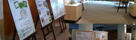 名大博物館スポット展示:植物細胞壁のミクロの世界