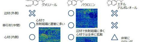 熱帯樹グメリナ内の抽出成分分布の可視化
